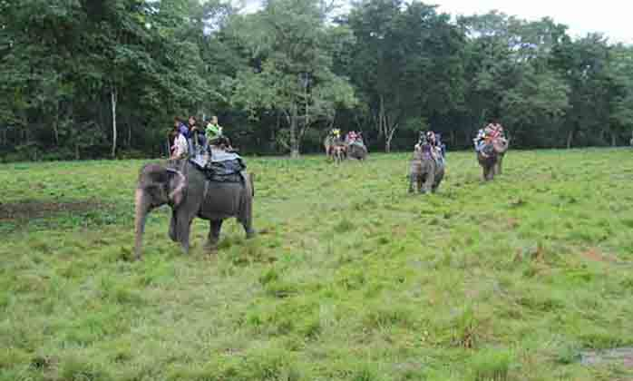 Wildlife Safari Tour (Four Days) (2)