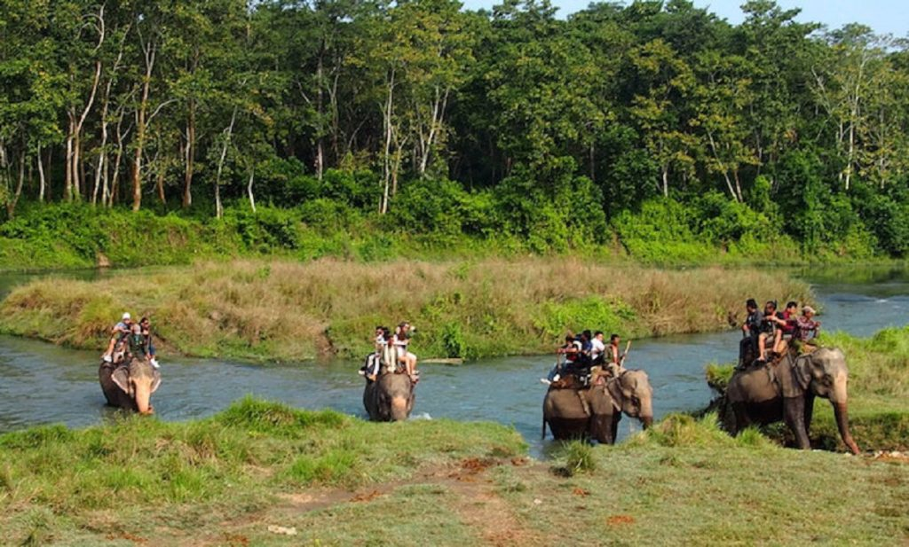 Wildlife Safari Tour (Four Days)