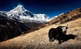 Praktische Nepal Resietipps
